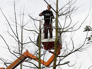 Baumschnitt / Baumfällung